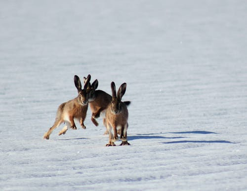 Unusual sports around the world: bunnies jumping in snow